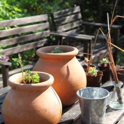 A garden in Provence